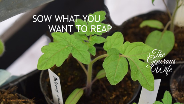 """Sow What You Want to Reap - If you want a particular thing in your marriage, you have to """"plant seeds"""" of the same kind."""